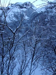 Glacial trees 2