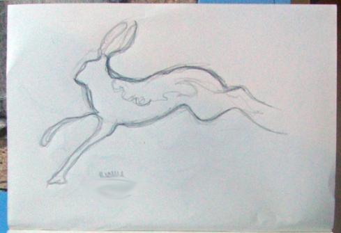 15 hare 2