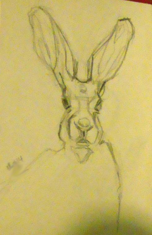 21 hare pencil