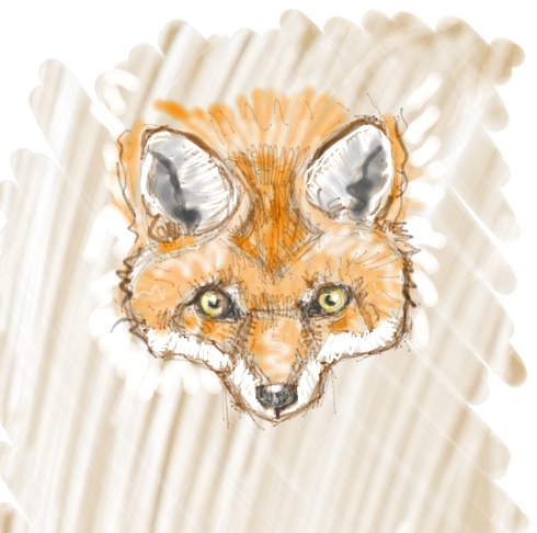 24 foxy