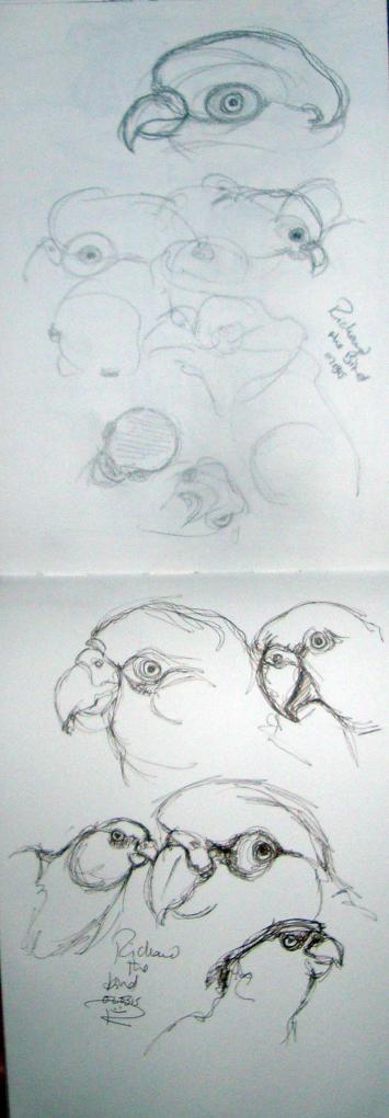 Richard the bird