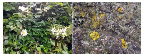 stone flora