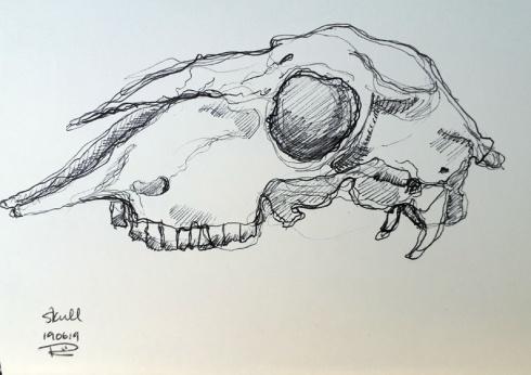 sheep skull 2