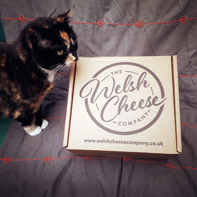 cheesy cat